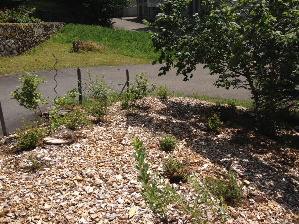 Ein frisch bepflanztes Moor- oder Sauerbeet